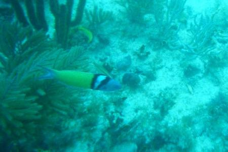 Fish in Crystal River